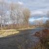 Vltava used to be salmon river