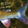 pf-2016-mh-tisk